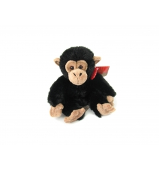 Chimpans